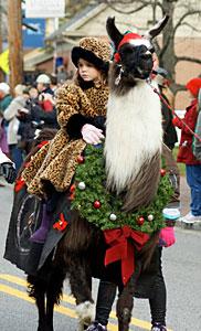 christmas-parade-llama